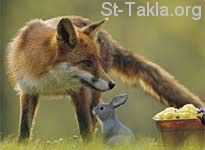 St-Takla-org___Fox-and-Rabbit